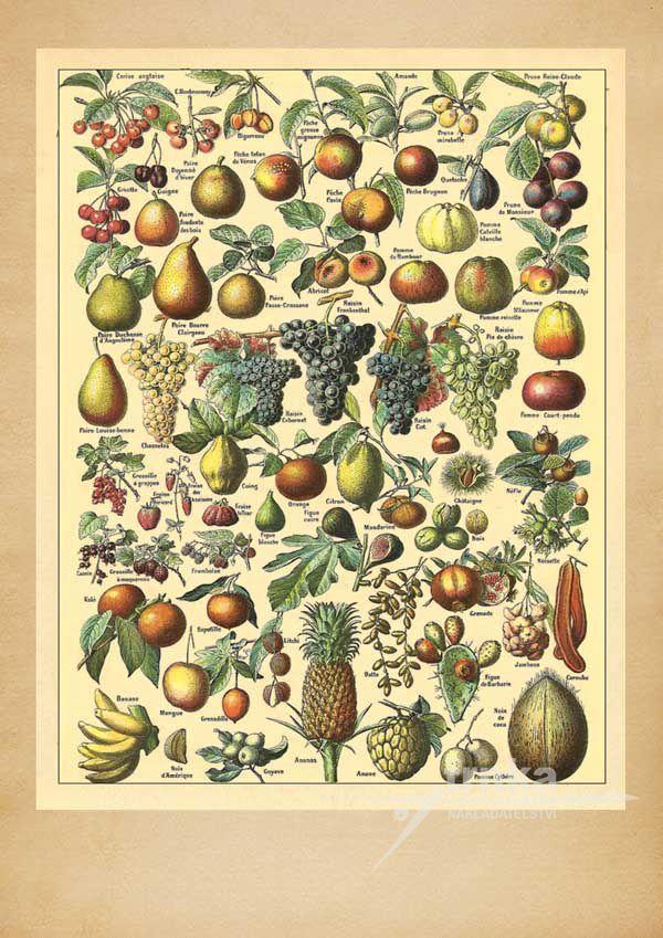 Líska na ovoce